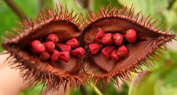 10 ejemplos de plantas nativas del Perú